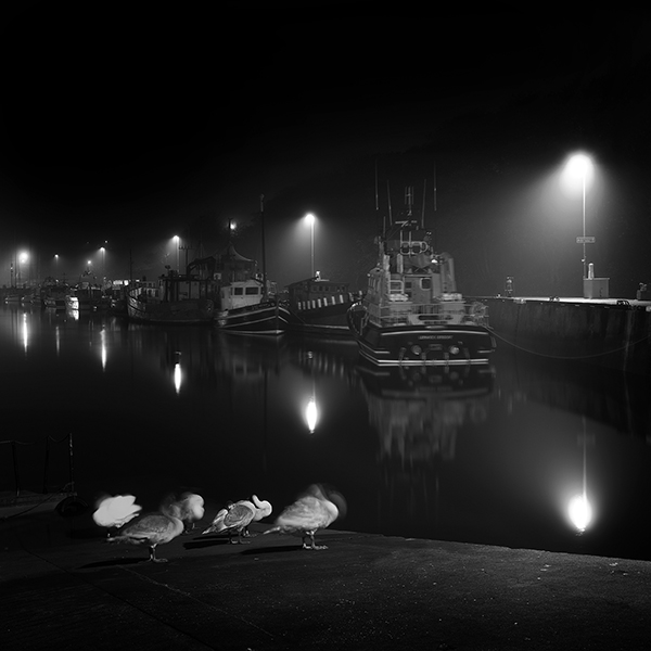 Cygnets on Eyemouth harbour at night