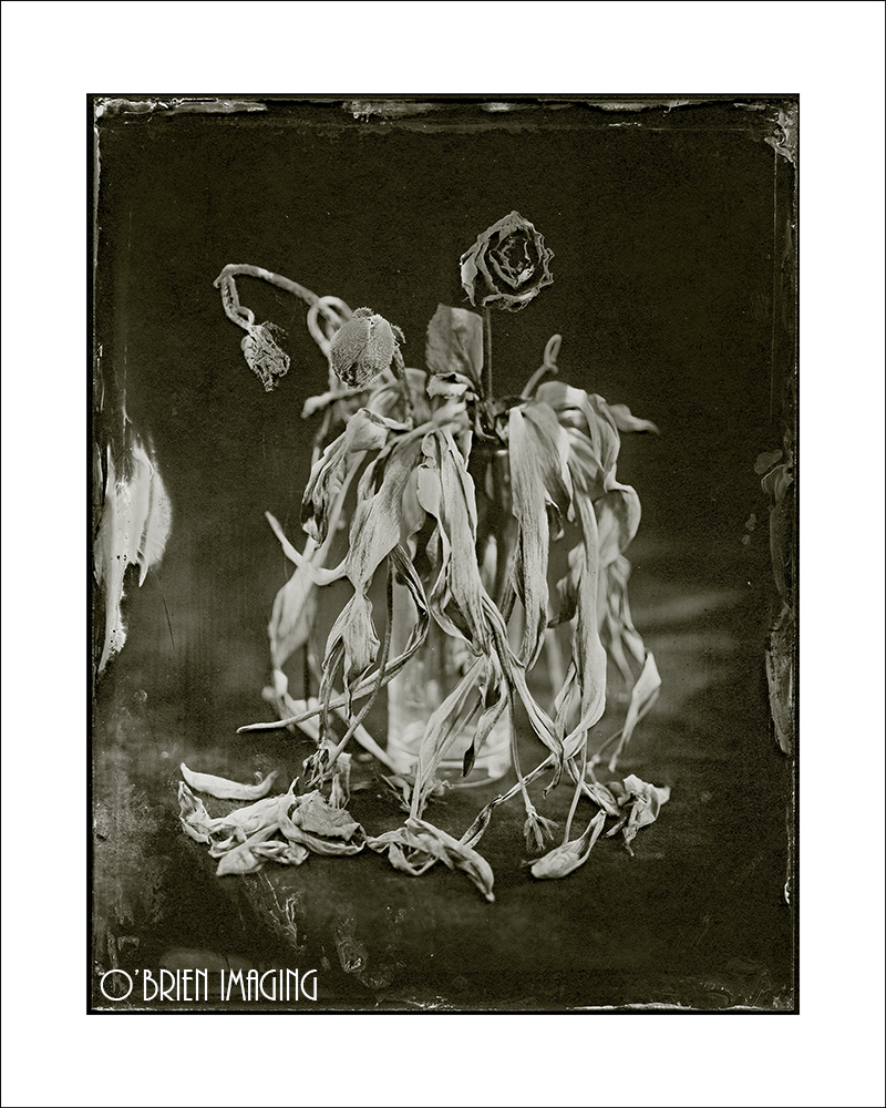 Collodion Image of Dead Flowers