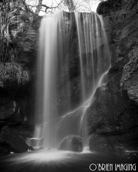 Roughting Linn. (mono25)